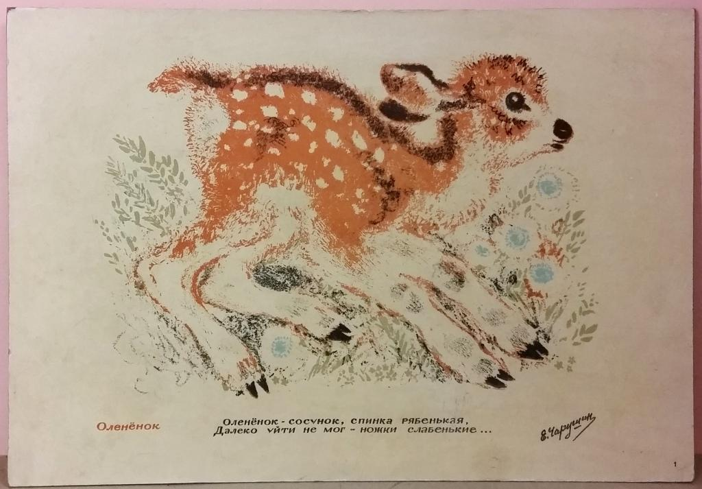 евгений чарушин рисунки животных все фотографии