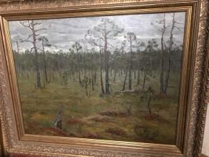 Северный лес (Моховое болото)