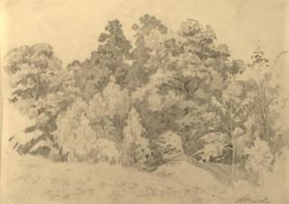 Пейзаж. Деревья