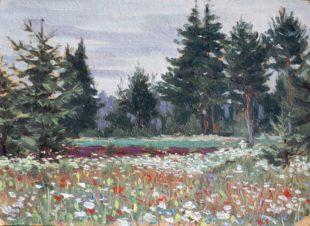 Цветы на лугу