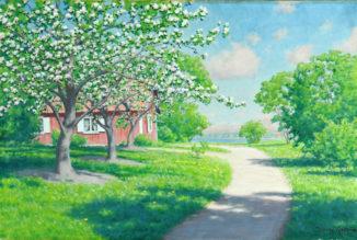 Цветущие яблони у красного дома