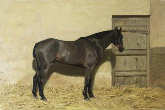 Лошадь в загоне
