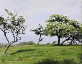 Весна в Оленьем парке Йегерсборг