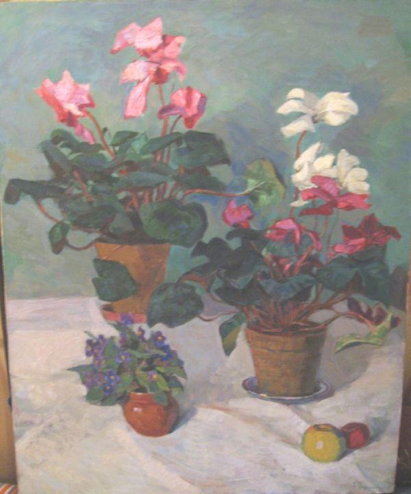 Купить цветы цикламены
